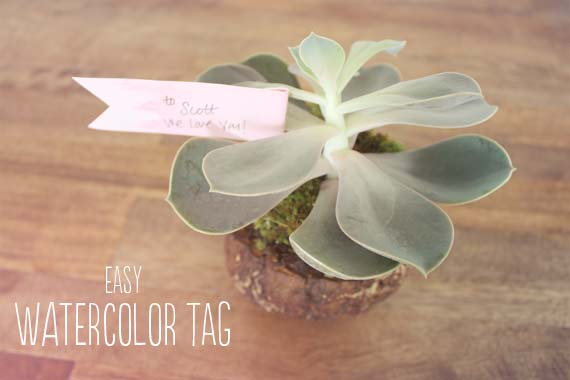 tag on succulent