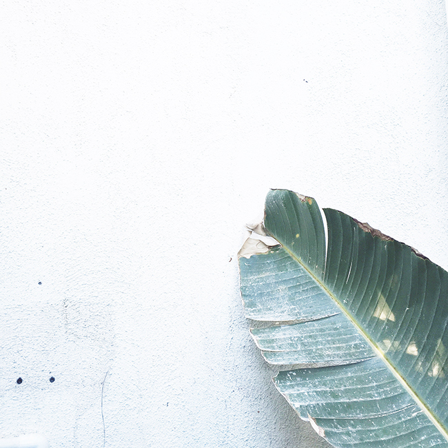 palm leaf | almost makes perfect