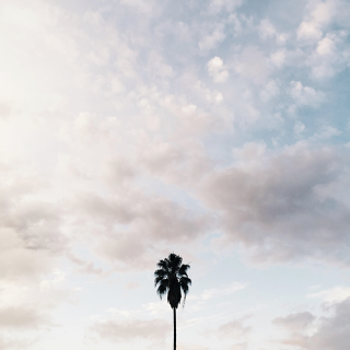 lonely palm   almost makes perfect