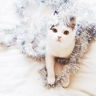 festive kitty | almost makes perfect