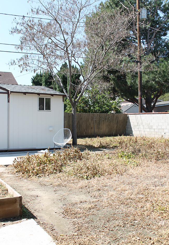 our backyard | before