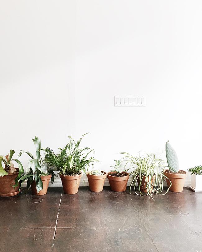 + cactus
