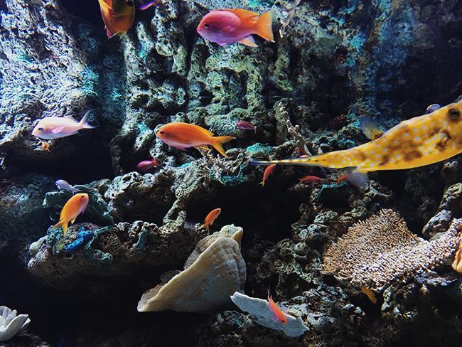 Aquarium Of The Pacific Food Trucks