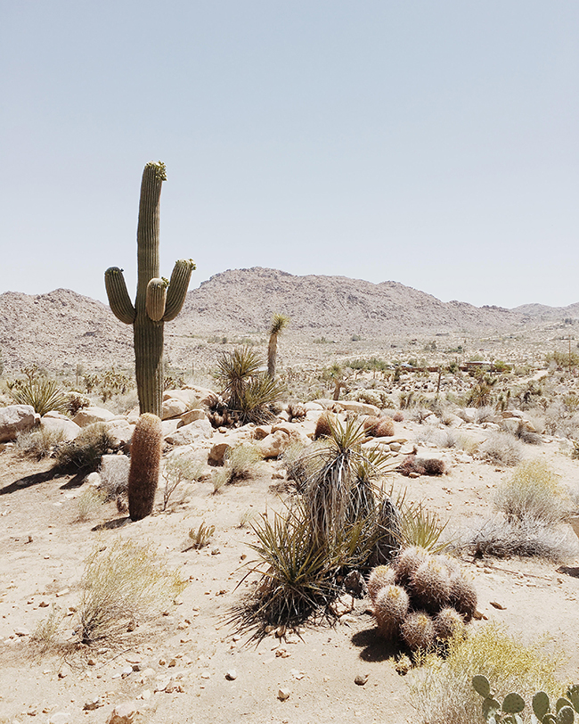 guide to joshua tree, california