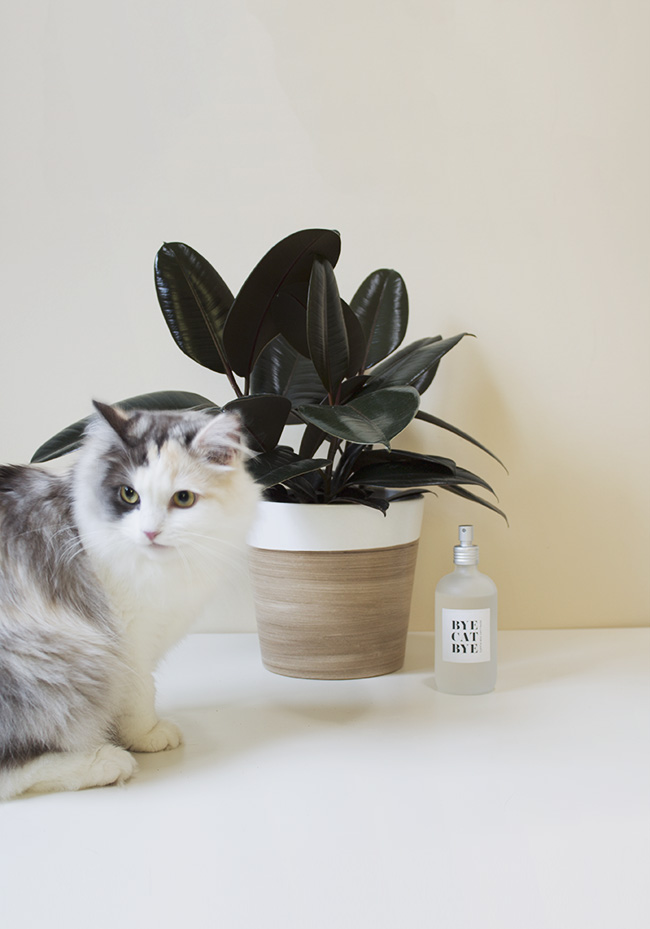 DIY cat repellant spray for plants | almost makes perfect