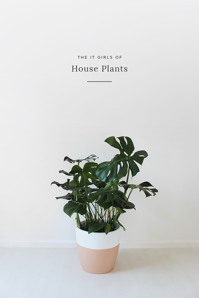 the it girls of house plants - almost makes perfect